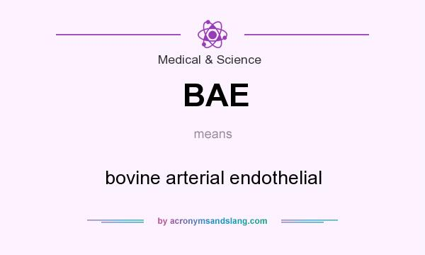 What does BAE mean? It stands for bovine arterial endothelial